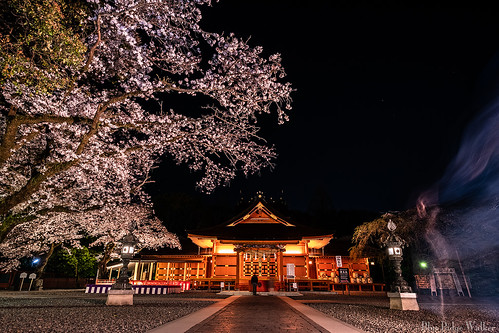 Fujisan Hongu Sengen Taisha with the cherry blossoms