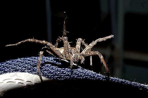 Spider   by noelcmn