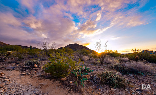 fujinonxf816mmf28r usa wideangle lens fuji fujixt3 review mirrorless dustinabbott travel dustinabbottnet comparison xt3 fujifilm test desert arizona photodujour scottsdale unitedstatesofamerica us