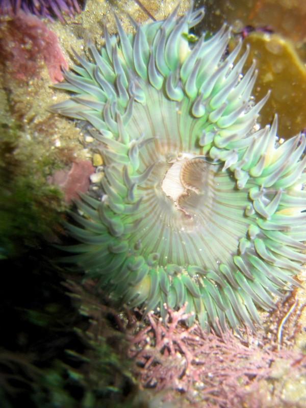 Aug 6th, 2007 Laguna Beach Diving Calif. 004