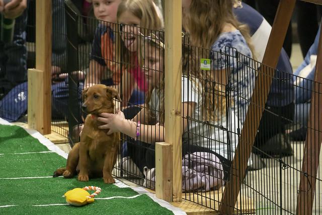 Puppy Bowl 2019 @Kanuga Conference Center (Hendersonville, NC)