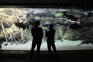 Den Bla Planet - Denmarks National Aquarium   by Jodimichelle