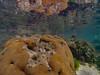 Brain Coral by Jose David