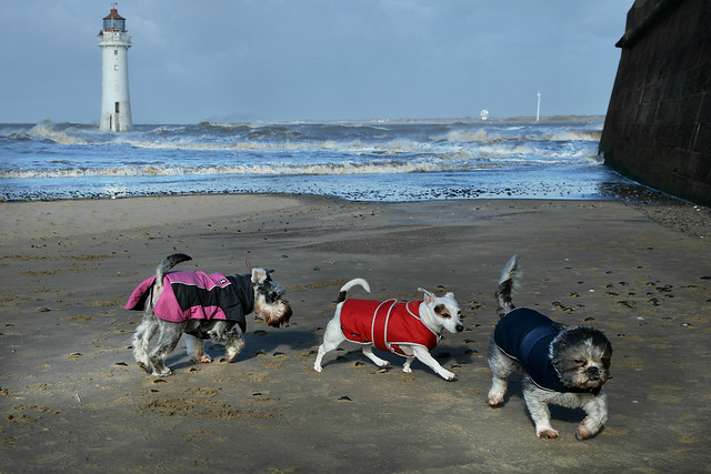 Three little dogs went to the beach.