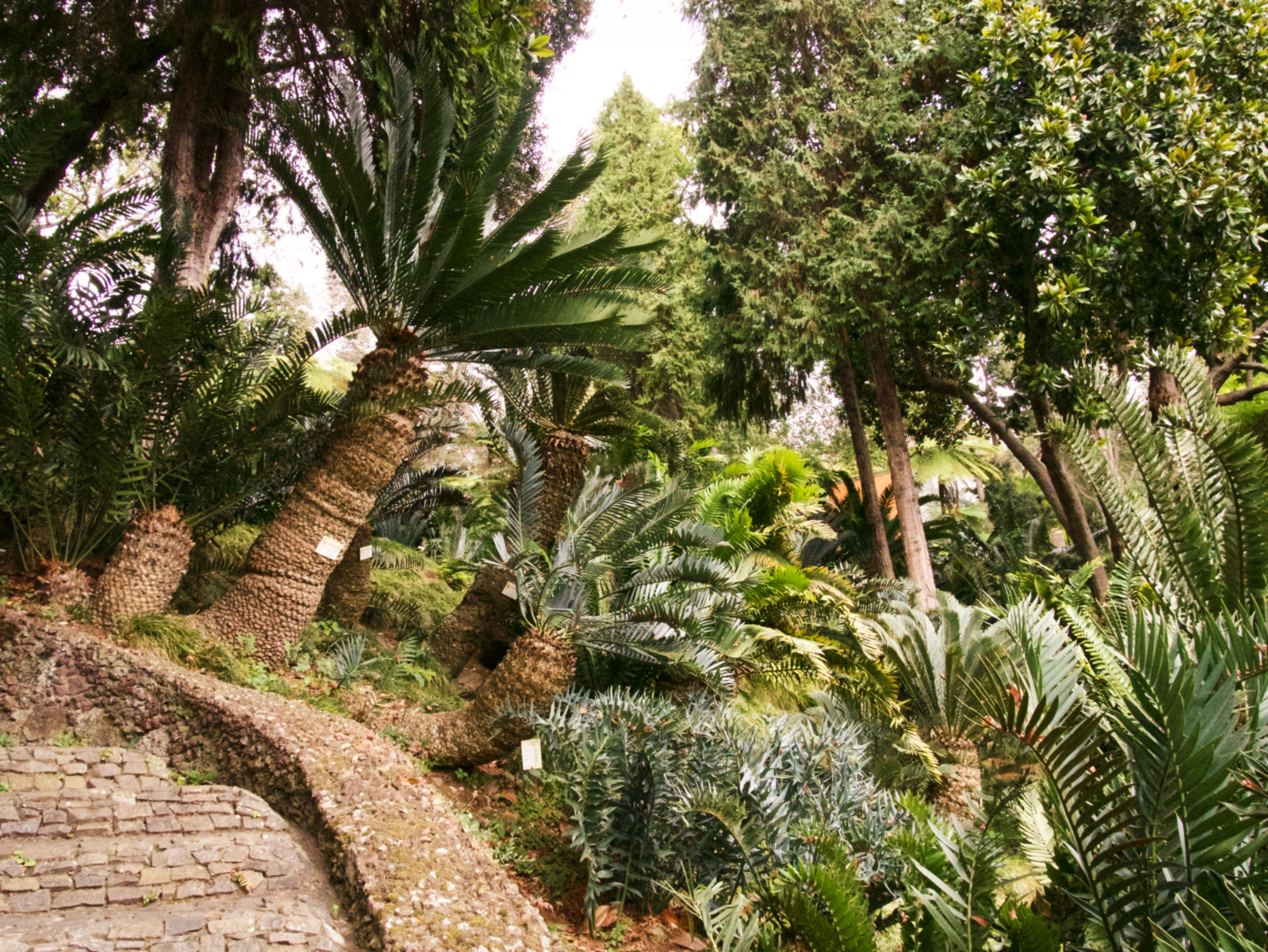 074-Madeira
