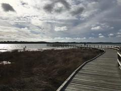 Lake Clifton Viewing Platform