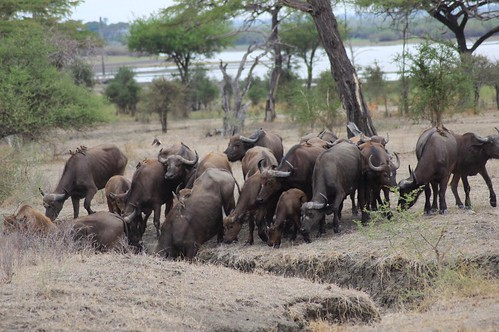 Africa Safari Selous, just behind the camp | by Paradise & Wilderness