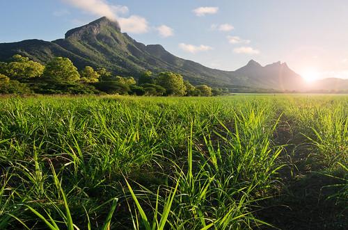 mountain mountainside holiday mauritius grass sky clouds sun sunshine path field trees peace calm morning sunrise