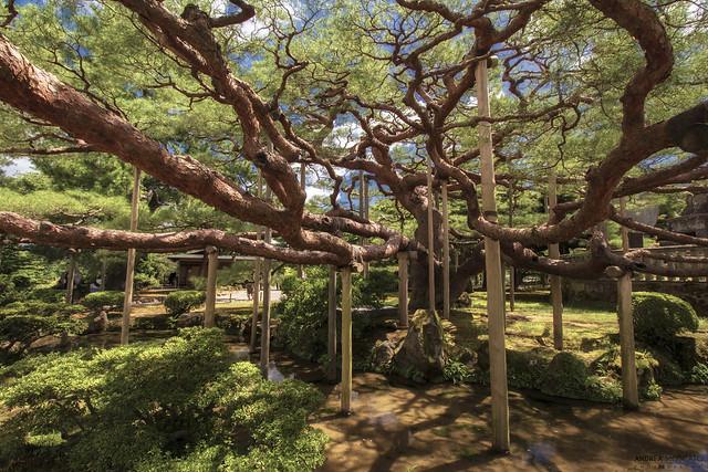 Kenrokuen Garden - Kanazawa (Japan)