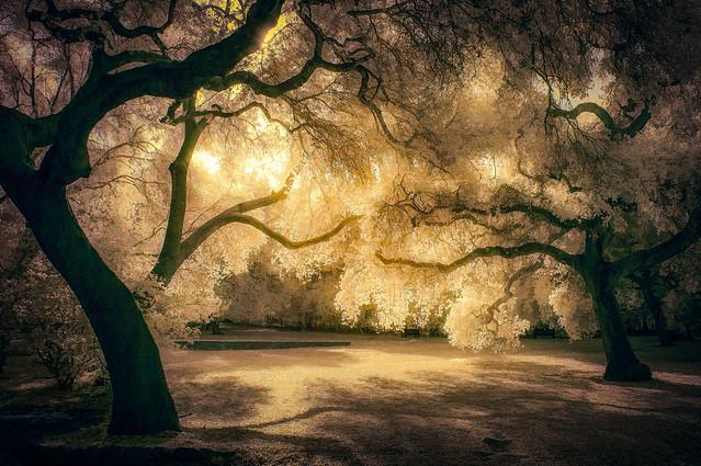 Under the Oaks - IR Pentatone