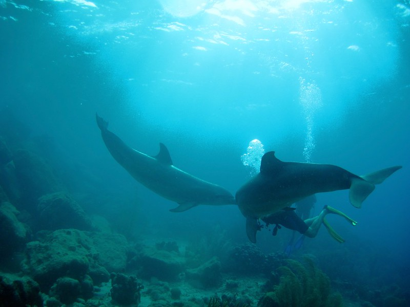 Curacao 2009-2010 Diving Disk 1 451
