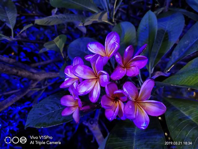 Hasil kamera Vivo V15 Pro (3)
