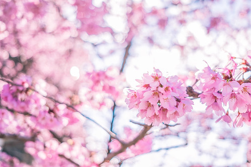 JAPAN.2019.031 | by ginomempin