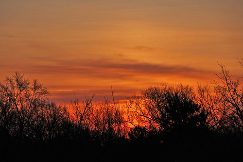 sunrise sunrisephotography cloudsandsky clouds trees red redsunrise redsky bereaohio