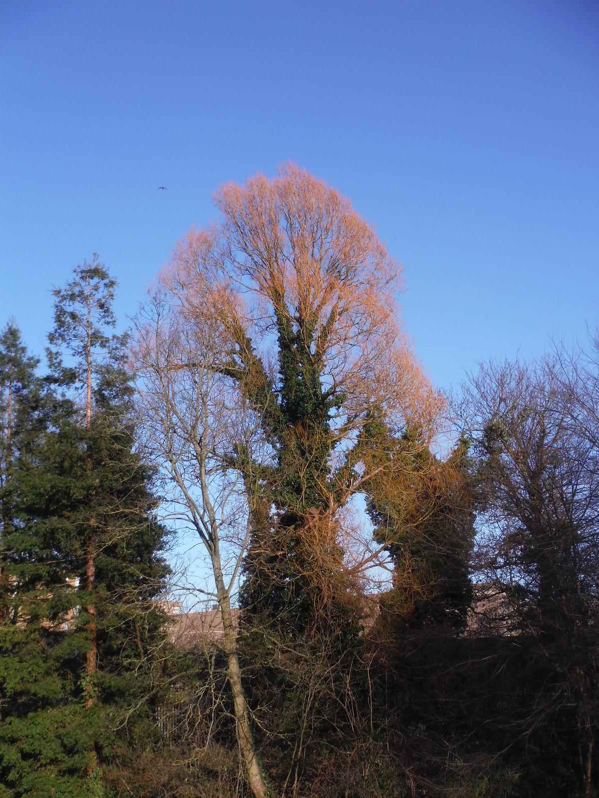 Tree in Winter Sun, Ladywell Fields SWC Short Walk 36 - Waterlink Way (Lower Sydenham to Greenwich)