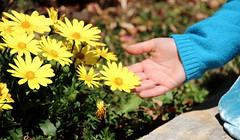 flower&hand
