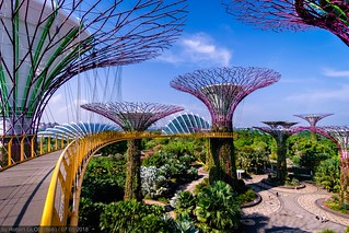 Gardens by the Bay - Supertree Grove: OCBC Skyway | by Robert GLOD (Bob)