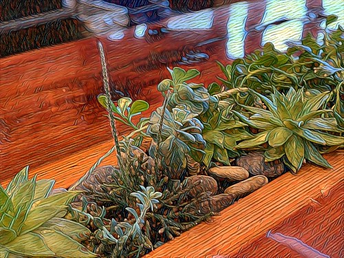 Succulents-Table_Mod_2 | by Doctor Free