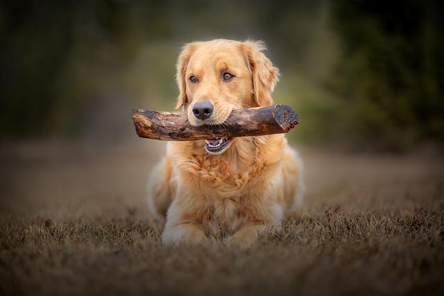 gatherer of sticks