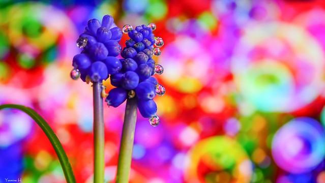 Flowers - 6656