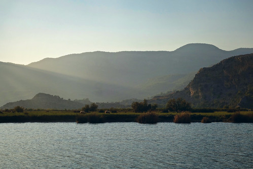 Sheep grazing in the Dalyan Delta | by sixthland