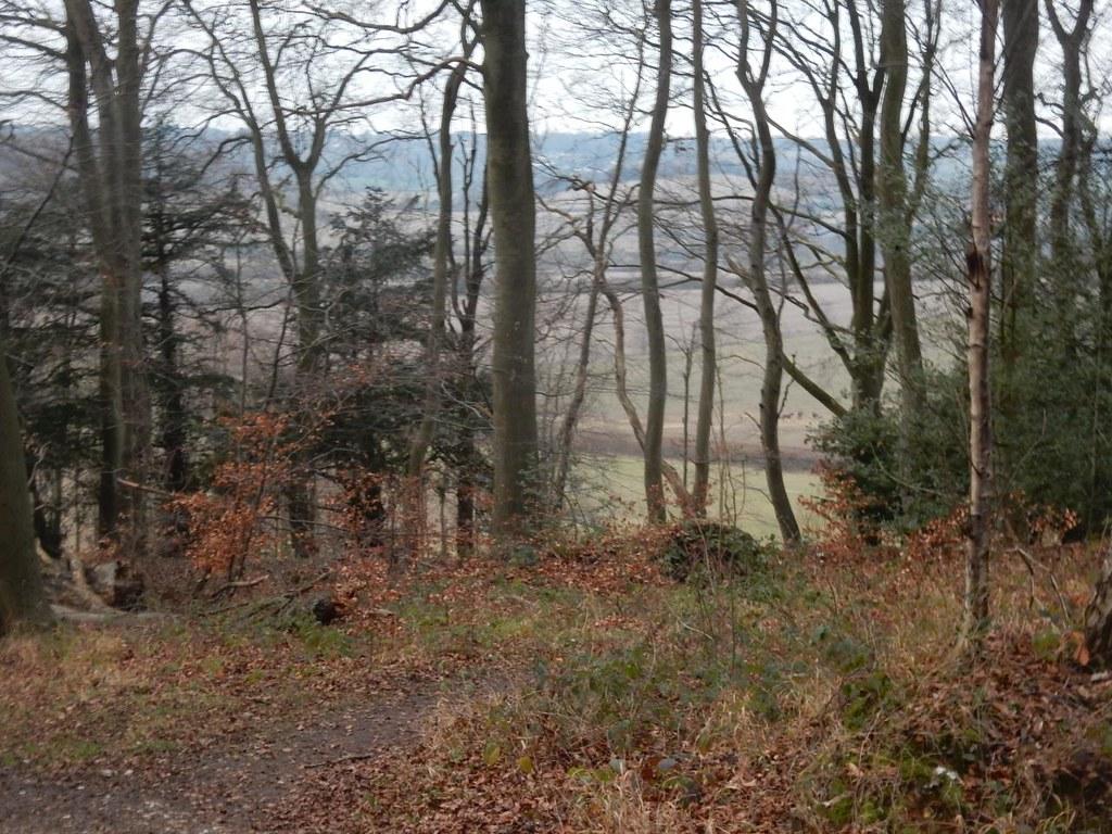 View through trees Little Kimble to Saunderton