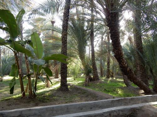Al Ain Oasis - 1