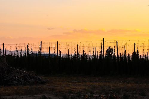 trip sunset summer usa canon colorado august roadtrip palisade goldenhour hops 2018 77d canoneos77d palisadetrip