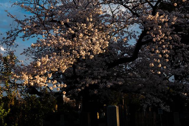 Sunbeams catching blossoms