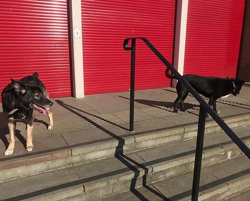 Taking in the sun #dogwalk | by johnpopham