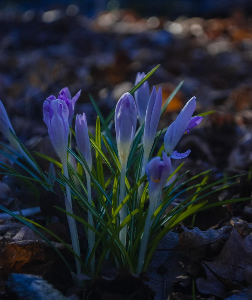 Spring it is! 09:42:40 DSC_2489