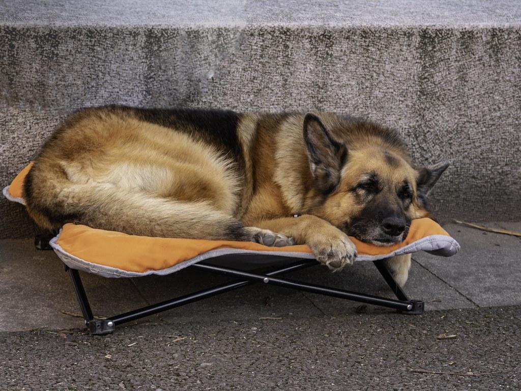 Une vie de chien ? 32566751427_0e6c196624_b