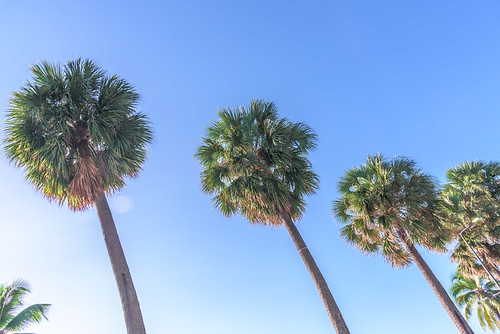 Palm Trees | by ruifo