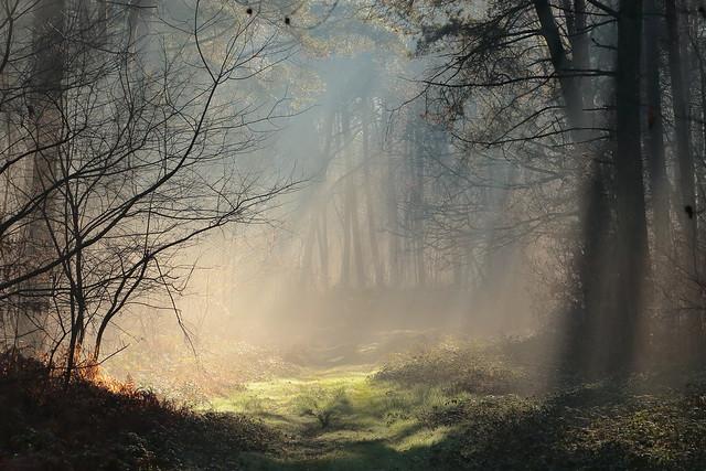 Lumière dans la forêt / Light in the woods