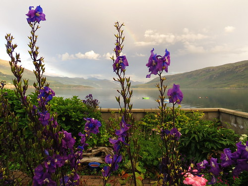 Les fleurs d'Ullapool, Ross and Cromarty, Ecosse, Grande-Bretagne, Royaume-Uni.   by byb64