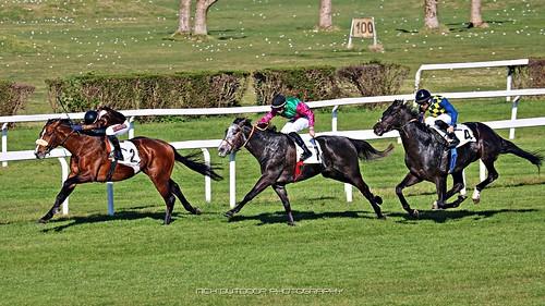 img4147 listedrace horseraces presley giornatedelfai horses ippodromodimilano fotografiasportiva ippodromodelgaloppo racecourse