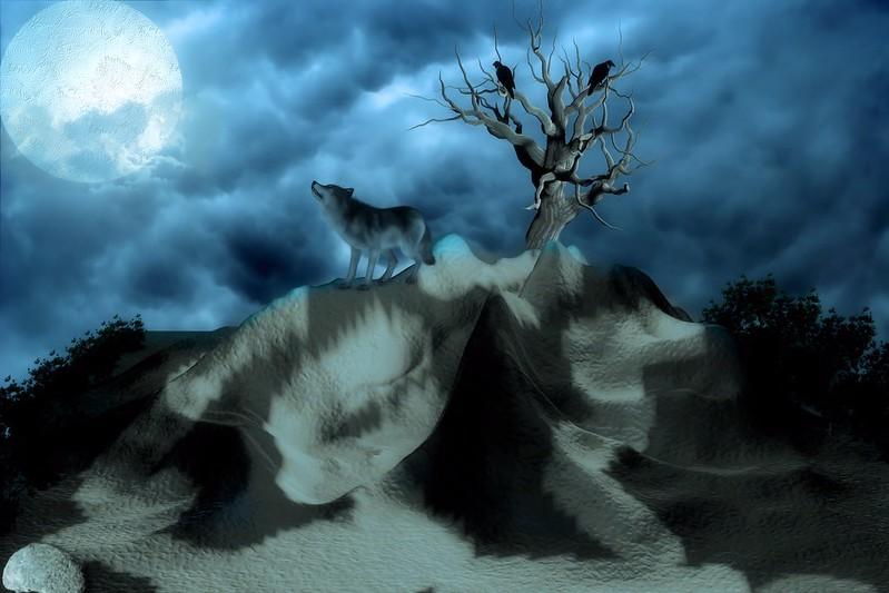 Обои волк, птицы, одинокий, холмы, ночь картинки на рабочий стол, фото скачать бесплатно