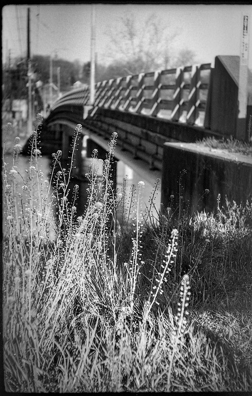 early spring wildflowers, overpass, guardrail, River District, Asheville, NC, FED 4, Industar 26, KOSMO FOTO 100, HC-110 developer, 3.23.19