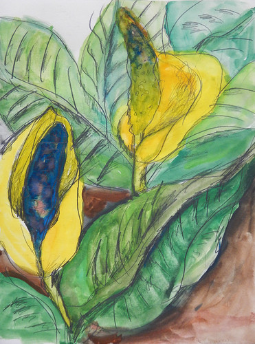 Gouache painting of a Skunk Cabbage