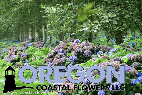 Farm Photos   by Oregon Coastal Flowers