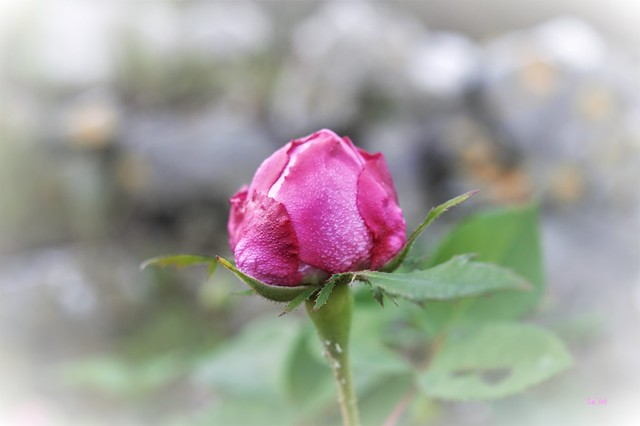 Coeur caché - Hidden Heart