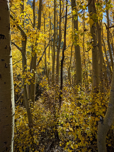 Autumn in Aspendell | by RuggyBearLA
