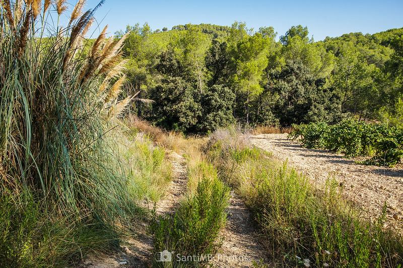 Camino entre viñedos de La Roqueta
