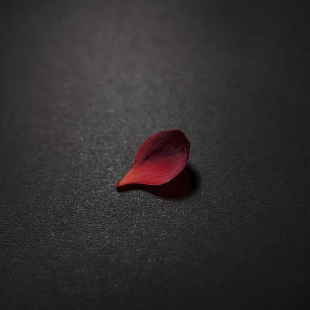 Unchain my heart #OneSinglePetal #minimalism