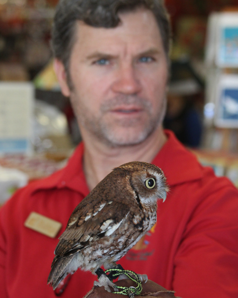 2019.03.09 Sunrise Wildlife at WBU Eastern Screech Owl Ruby 2