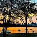 Saturday #sunset vibes in #benjakitipark #bangkok