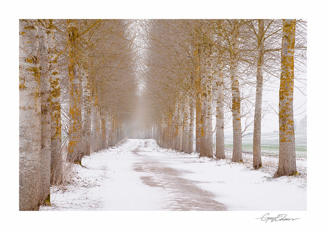The Avenue in Snow