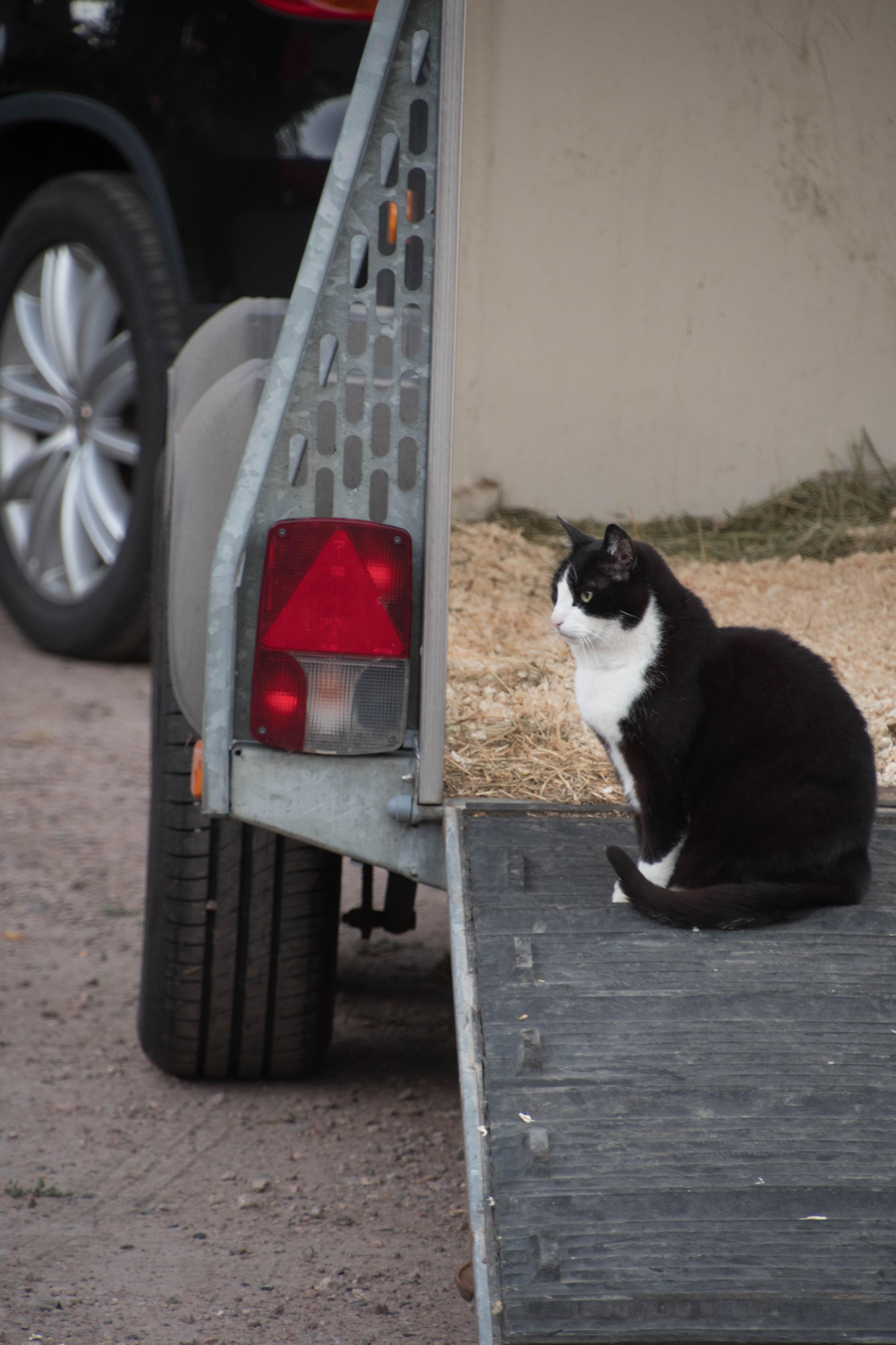 20180629 Cat in a horsetrailer