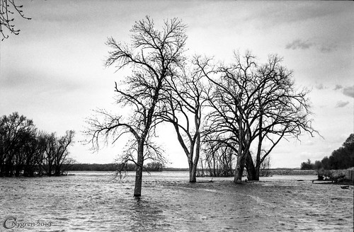 Flooded Lagoon