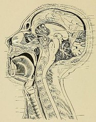 This image is taken from Page 172 of The physiology and pathology of the cerebral circulation; an experimental research